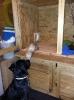 Unsere Welpen gewölft 2012 haben alle ein schönes neues Zuhause gefunden!