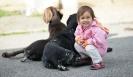 Hunde mit Kind