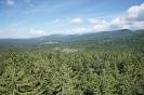 Wipfelpfad und Baumei